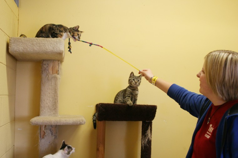 Alison Pacey, 14 Genoa, plays with a few cats at Tails Humane Society, 2250 Barber Greene Road, as a part of her volunteer hours.