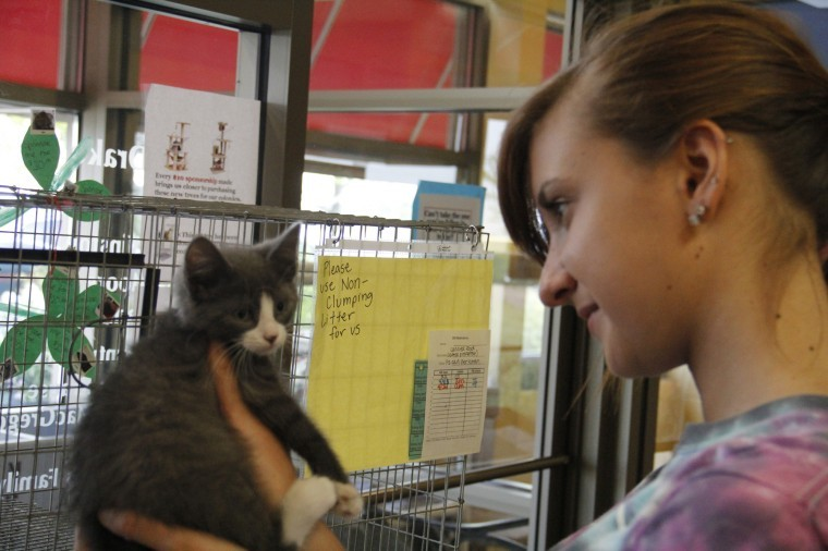 Carly Stadie, 17, of Hampshire plays with a kitten Wednesday evening at TAILS Humane Society, 2250 Barber Greene Rd. DeKalb.
