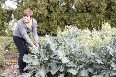 Community Gardens coordinator Kathryn Olsen examines kale plants Oct. 5 at a gardens event. Dan Kenney, DeKalb County Community Gardens executive director, is working with Kirkland farmer Gene Heinsohn to win a grant that would bring $5,000 to the Garden Paths of Hope project. The project seeks ot create a farm where people with disabilities or the homeless can work to develop life skills they can't learn elsewhere.