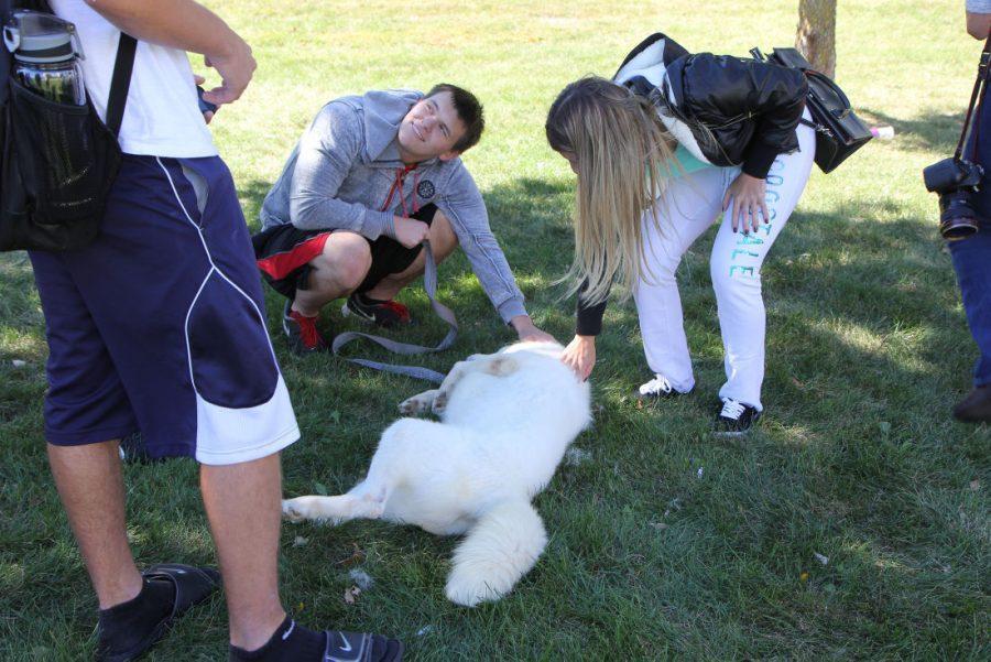 Students pet huskies between classes