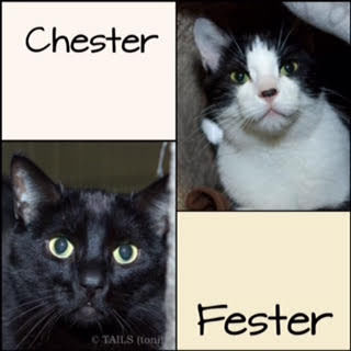Adopt-a-Pet of the Week: Chester and Fester