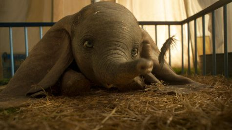 'Dumbo' tells the story of a baby elephant who is given the ability to fly by his incredibly large ears.