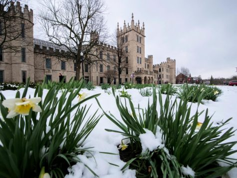 Snow-covered flowers bloom outside of Altgeld Hall.