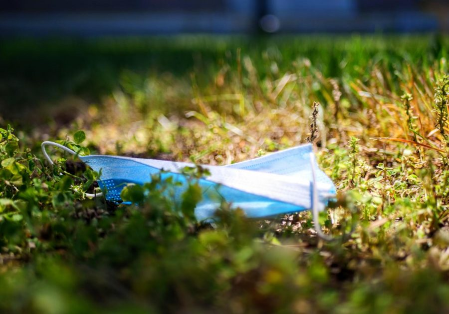 A worn face mask lays in the grass at Memorial Park in DeKalb on Thursday, June 11th.