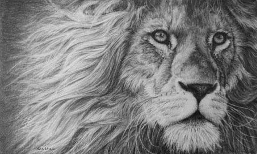 Pamela Sanders' sketch of a lion.