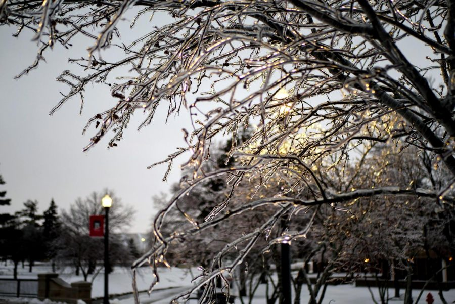 Icy tree on NIU campus post winter storm.