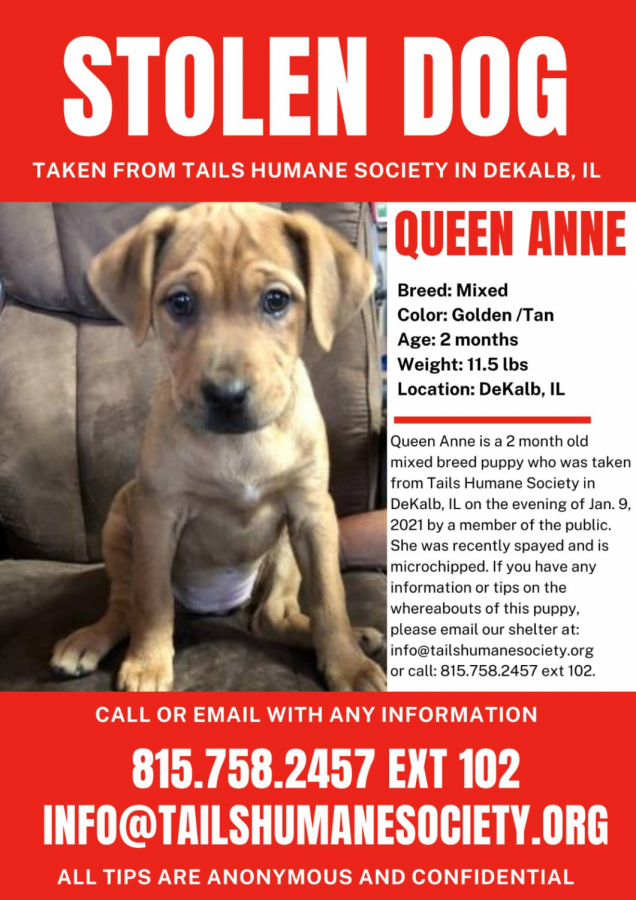 Flyer+for+stolen+puppy+at+tails+humane+society