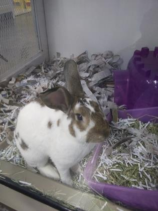 Somersault is one of the newest bunnies at Tails.