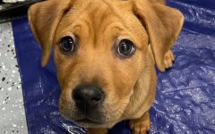 The 2-month-old puppy named Queen Anne was returned Wednesday night.