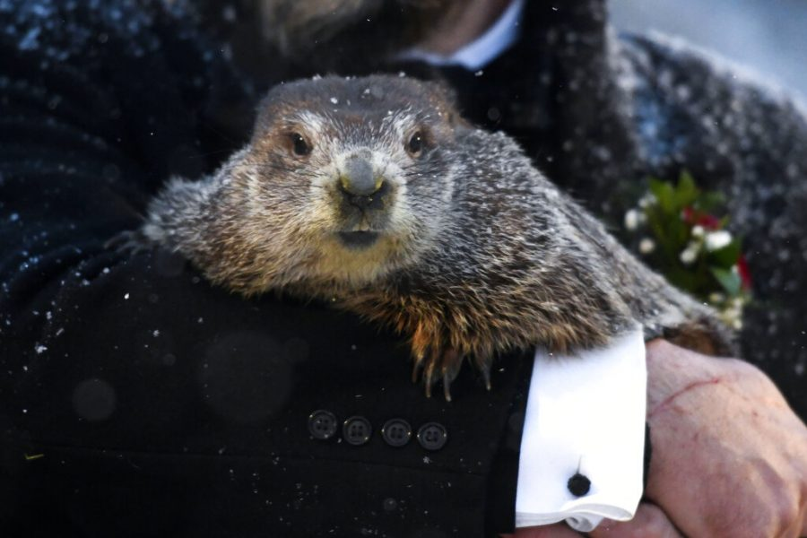 Groundhog Club handler A.J. Dereume holds Punxsutawney Phil, the weather prognosticating groundhog, during Tuesday's 135th celebration of Groundhog Day. Phil's handlers said the groundhog has forecast six more weeks of winter weather.