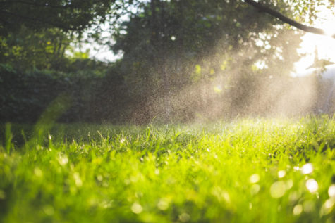 Rain and dew shine in the sunlight above wet, green grass.