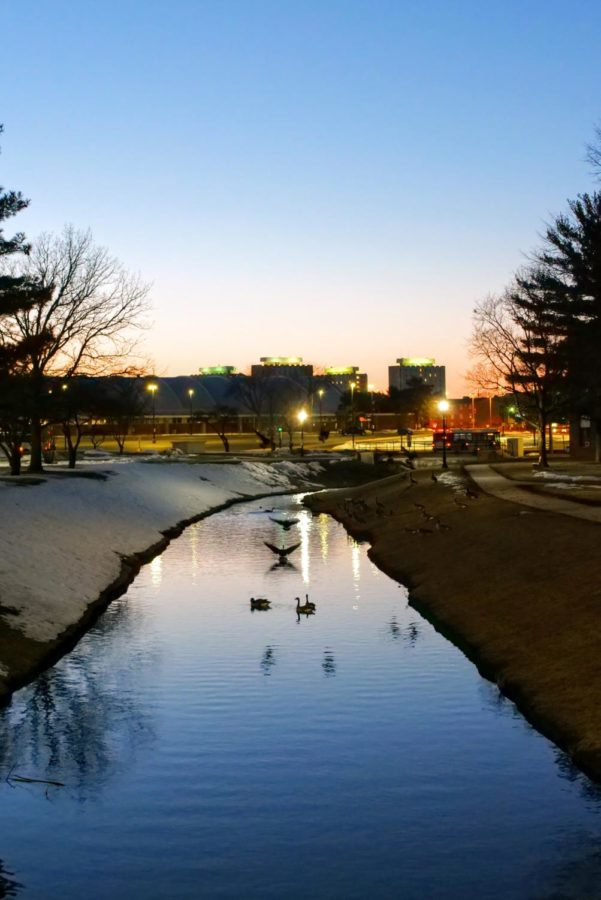 Geese land in the stream next to Cole Hall on March 3, 2021.