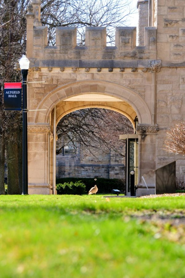 A goose stands under the entrance to Altgeld Hall Thursday.