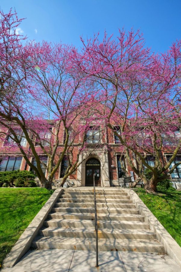 Pink flowers bloom on trees Thursday outside Still Hall.