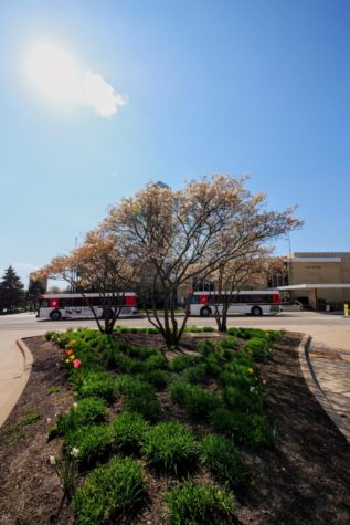 Flowers bloom on trees in April outside of Adams and Williston Hall at NIU.