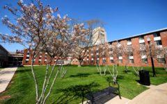 White flowers bloom on trees Thursday outside of Neptune East Hall.