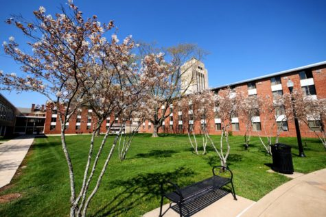White flowers bloom on trees Thursday outside of Neptune East Hall.