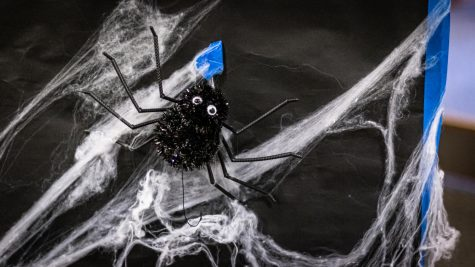 Halloween decorations featuring a spider and webs located in the residence halls for Halloween.