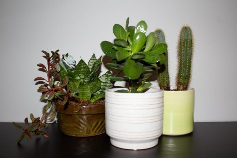 An assortment of easy plants to take care of.