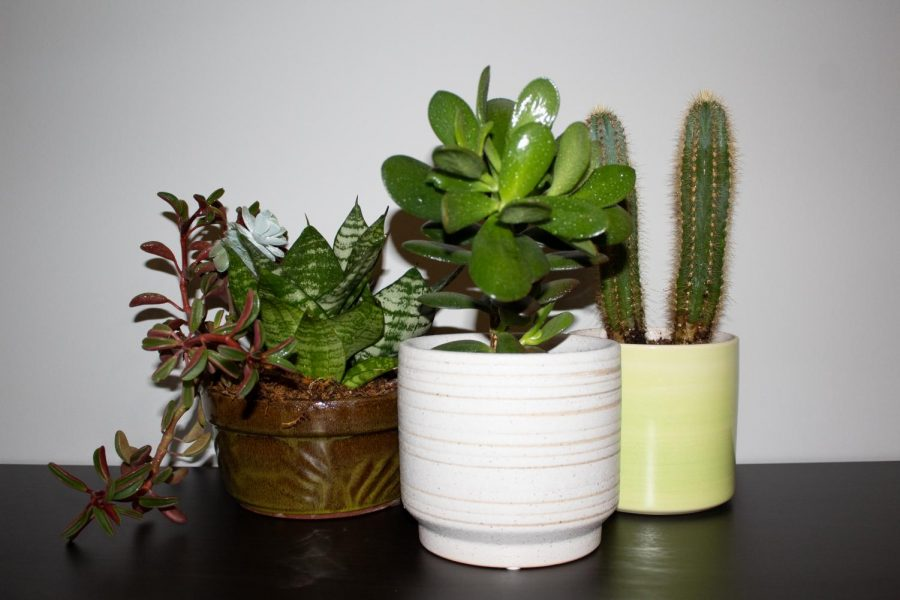 An+assortment+of+easy+plants+to+take+care+of.